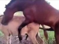 Gay Horses and Donkeys Mating Compilation