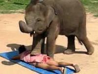 Masaż słoniem.