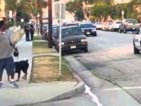 Pies na spacerze. Drastyczne.