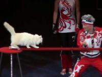 Rosyjskie koty cyrkowe