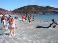 Ratowanie delfinów na plaży w Brazylii