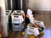 Papuga krzyczy do kubka