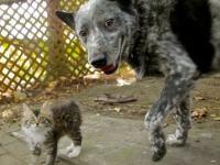 Pies i jego koci kompan z uszkodzonym układem nerwowym