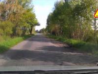 Dzicz na drodze