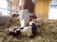 Nowoczesne technologie w hodowli bydła mlecznego