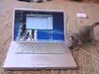 Tak to się właśnie dzieje gdy kot dobiera sie do laptopa :)