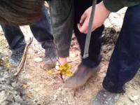 Instrukcja sadzenia drzewek