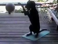 Pies grający w koszykówkę
