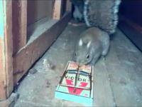 Nieśmiertelna wiewiórka