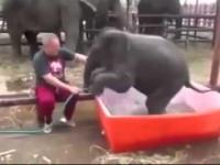 Pierwsza kąpiel małego słonia