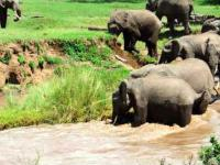 Nurt rzeki porywa małego słonika