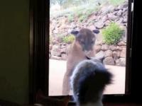 Duży kot i mały kot
