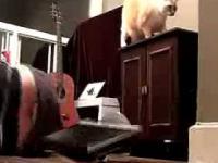 Kot próbujący zabić właściciela