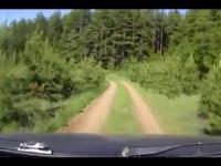 Na czołowe w przy leśnej drodze