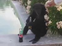 Małpy zachowują się jak ludzie