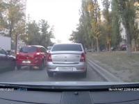 Gołąb sprawcą wypadku drogowego
