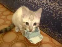 Kot-złodziej ukradł kasę i nie chce jej zwrócić