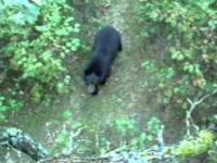 Niedźwiedź i drabina