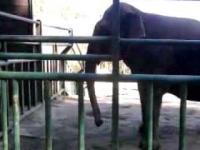 Słoń lubiący czarne rytmy;)))