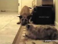 Gdy kot stoi psu na drodze