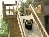 Cztery małe pandy na zjeżdzalni