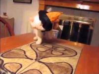 Kot nie zadowolony z kostium