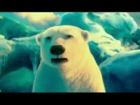 Niedźwiedzie Polare zapowiedź