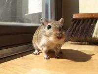 Płochliwy Myszoskoczek :)