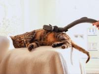 Specyficzny kot