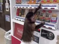 Urocza małpka kupije soczek z automatu