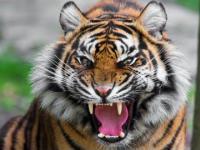 Kompilacja ataków zwierząt