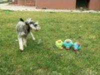 Zakręcony pies kontra Zielona Gąsienica