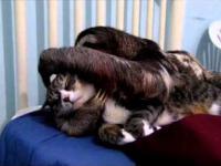 Leniwiec i kot