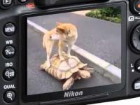 Pies jedzie na żółwiu - funny