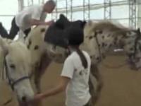 zabójcą koń