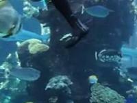 Nurek czyszczący akwarium spotyka swojego podwodnego pupila