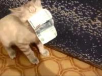 Kot kradnie pieniądze