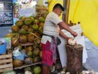 Każdy myśli, że kokos to ten brązowy owoc w sklepie? To tylko jego pestka