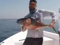 Tuńczyk Shake