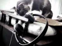 Słuchawki i Kot