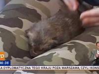 5 małych lisków uratowanych przez ludzi