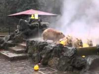 Enjoy Life - Capybara