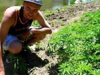 Największa plantacja marihuany na świecie- wyprawa autostopem
