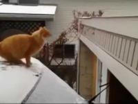 Koty i ich wypadki.