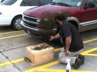 Pszczelarz kontra rój na samochodzie