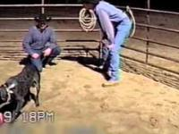 Najbardziej posłuszny pies na świecie