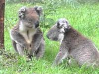 Epic Sax - Koala version