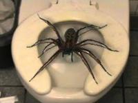 MetiuszGRA - BIG SPIDER !! Wkręcona siostra (joke with my sister)