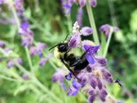 Pszczółeczka przybija piątala!