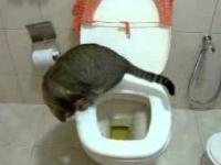 Kot korzysta z sedesu